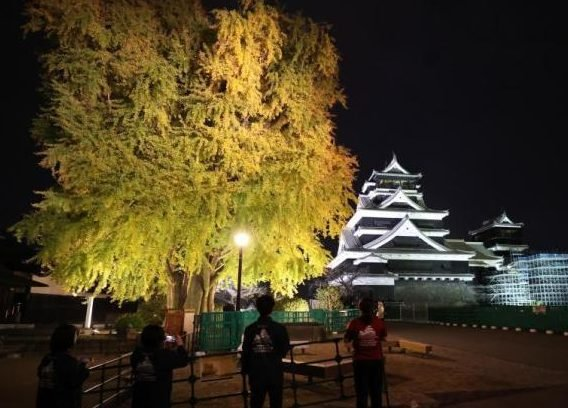 """Dreamy spotted! After the earthquake, Kumamoto Castle in Japan was """"opened at night"""" for the first time."""